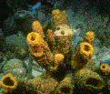 Corals and sponges are needed to filter the ocean waters.