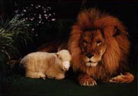 Lion and Lamb in the New Earth